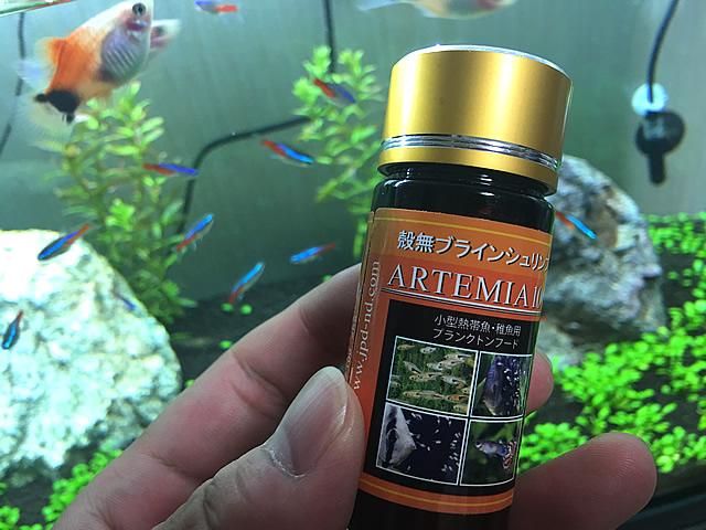 水槽 アルテミア